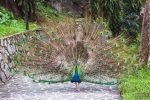 парк птиц Куала-Лумпур